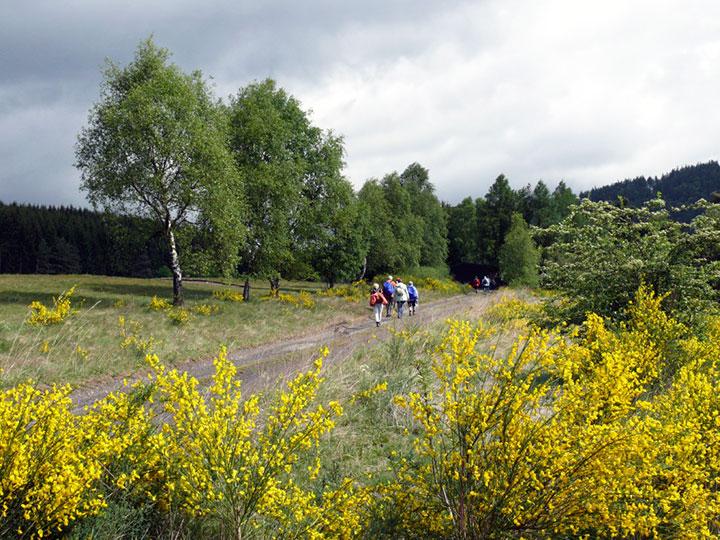 Genießen Sie die wunderschöne Landschaft rund um den Hof Kilbe bei einer ausgiebigen Wanderung auf dem Ederhöhenweg
