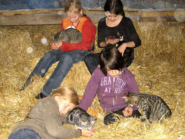 Die Tiere auf unserem Hof Kilbe freuen sich über Ihren Besuch und warten auf die Streicheleinheiten